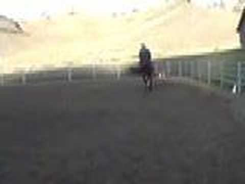 Dressage horse for sale, second level Video