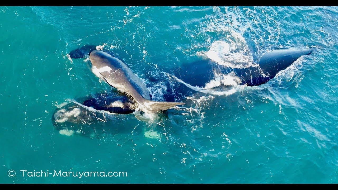 クジラの画像 p1_6