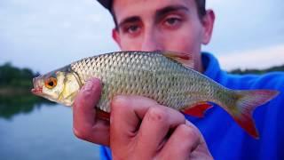Nęcennie dzień 2 -Atak mew,jak nęcić ryby ,gotowanie mixu i wzdręgi na spławik