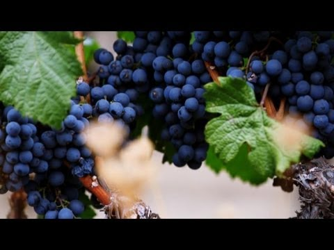 The Future of Winemaking Is in High-Tech Robotics