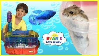 Ryan's First Pet Fish