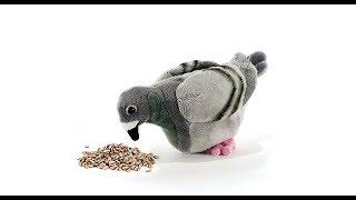 কবুতরের বাচ্চাকে তাড়াতাড়ি নিজে খাবার খাওয়া শেখানোর উপায় | pigeon baby care