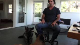 Robert Cabral, dog trainer & founder of Bound Angels speaks about the Lovetuner