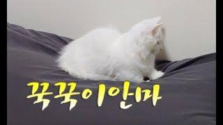고양이 꾹꾹이 안마하는 귀여운 고양이 cat kneading