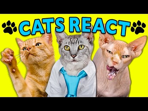 CATS REACT TO VIRAL VIDEOS #2