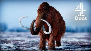 Should Scientists Bring Back Mammoths?