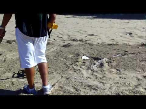 -Peschici spiaggia detecting 2011-
