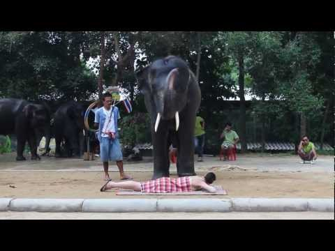 Butt Massage From an Elephant in Thailand