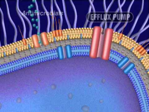 Antimicrobial resistance (produced by FDA).wmv