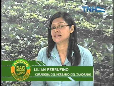 Accion Agropecuaria en vivo 11 de Noviembre de 2013