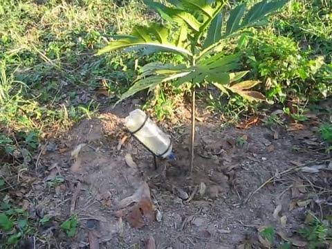 riego por goteo con botellas recicladas jgaldamezperez@yahoo.com