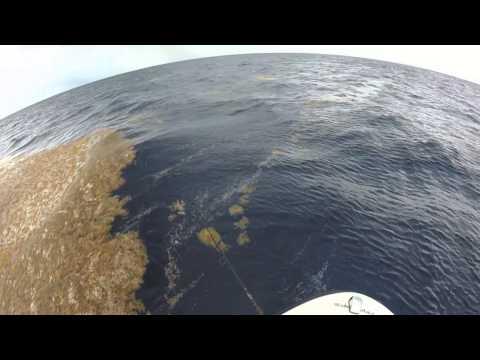 Pressure Guruz South Florida Fishing - Mahi Mahi off Jupiter, FL- June 13, 2014