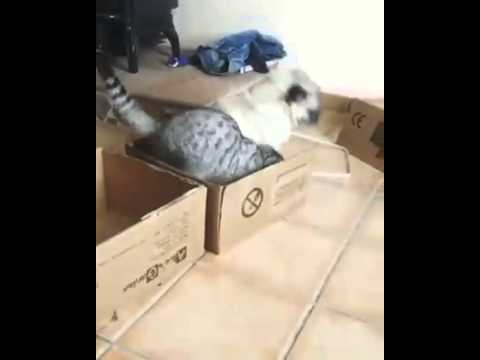 Cat Wants All the Boxes