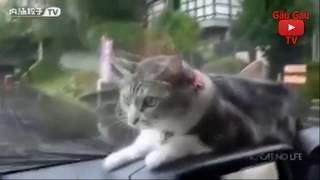 Đố bạn nhịn cười với mấy thánh chó mèo lầy lội này #1 |  Try not to laugh challenge with Animals #1