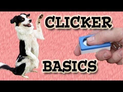 Clicker Training Basics - Dog Training