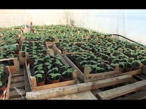 Proizvodnja salate u plastenicima - U nasem ataru 371.wmv