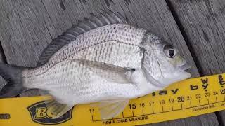 This Week in Fishing