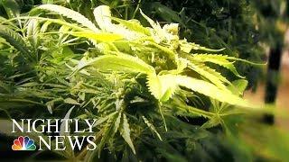 Study: Medical Marijuana Helps Children Who Have Seizures   NBC Nightly News