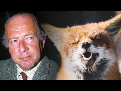 Alan Coren's funny take on foxes & fox hunting