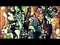 Marissa Nadler - Firecrackers (Official Video)