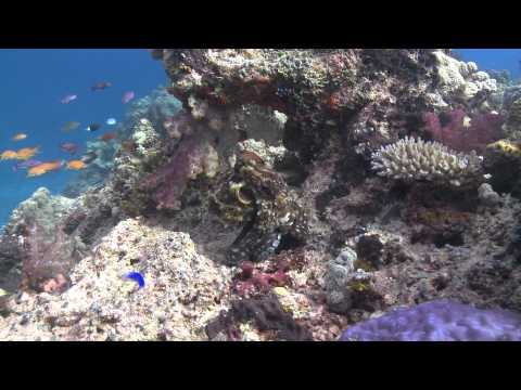 Scuba Diving in Fiji. NAI'A Trip Highlights 6-16/11/10