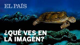 ¿Mujer o tortuga? ¿Qué ve usted en esta imagen? | VIRAL