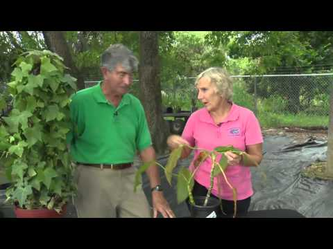 Central Florida Gardening   2 Min Pests   House Plant Problems