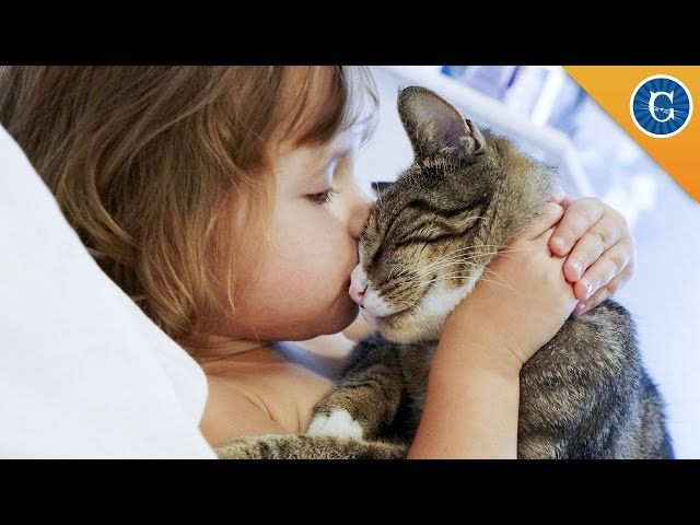 Cats and Kids Go Great Together!