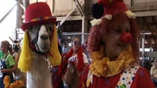 Thumb Concurso de Llamas Disfrazadas