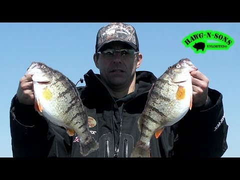 JUMBO Perch Fishing Ultimate Secret Exposed - Chicago Lake Michigan Anglers April 29