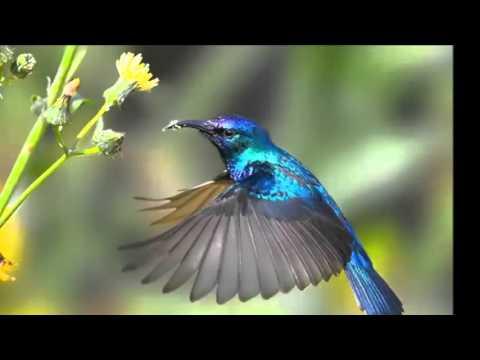 Kumpulan Kicauan Burung Kecil Untuk Pemancing Bunyi