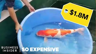 Why Koi Fish Are So Expensive