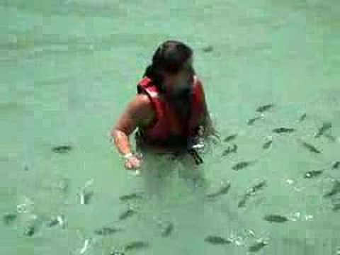 Baby shark attack
