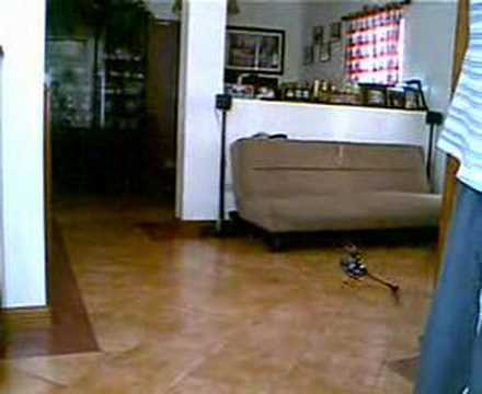 Lama V4 Tail Rotor / double pitch mod indoor hover test