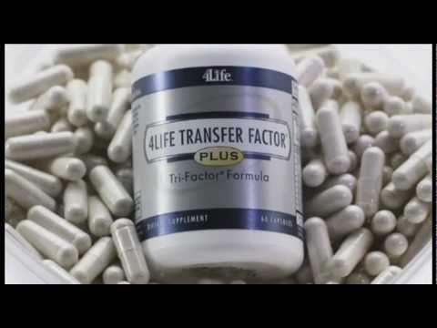 Factores De Transferencia     Transfer Factor     4life   Transfer Factor     Espa  Ol