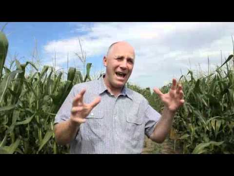 Corn School: Maximizing Yield with Dry or Liquid Starter Fertilizer
