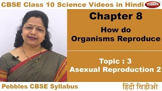 Class 10 | CBSE NCERT | Science | Ch 8 | Organisms Reproduce | T3 | Asexual reproduction 2 | Hindi