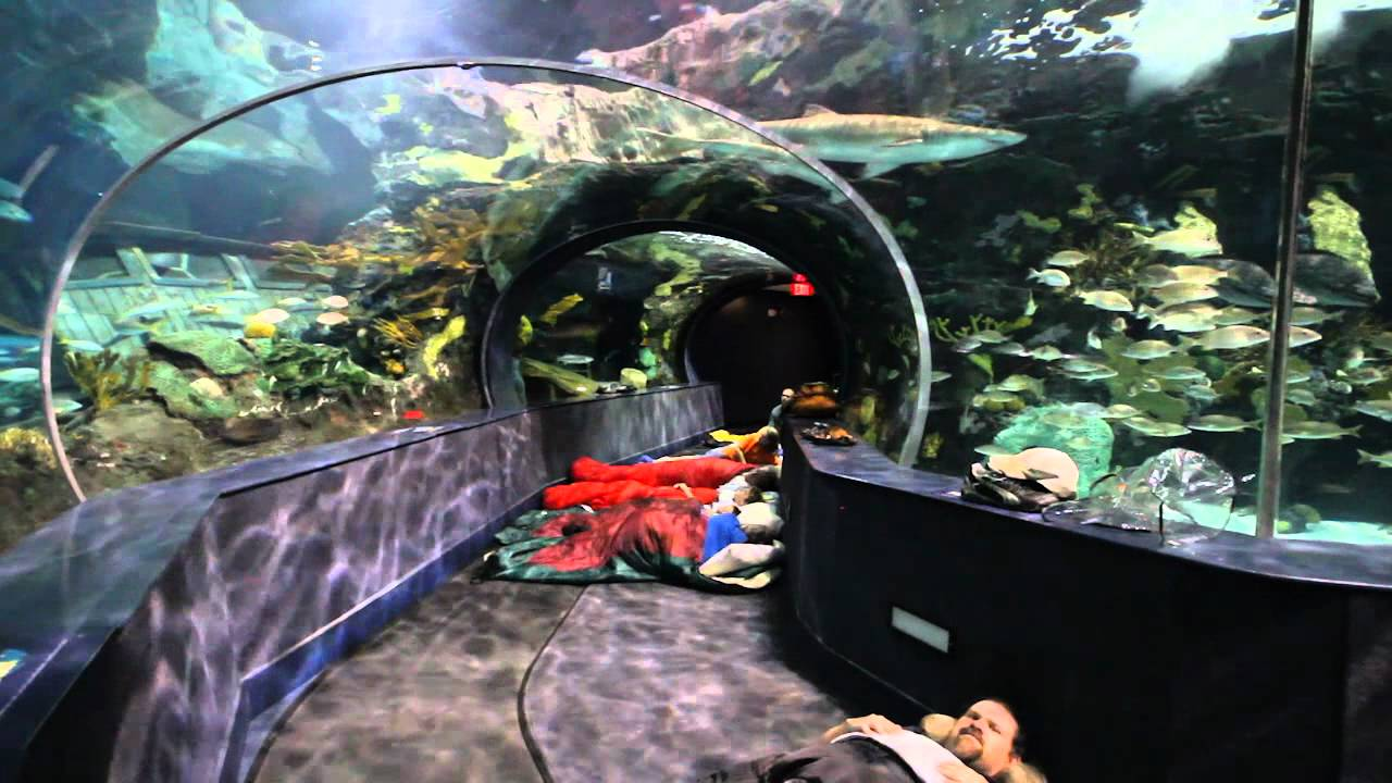 Sleeping With The Sharks At Ripley 39 S Aquarium Of The