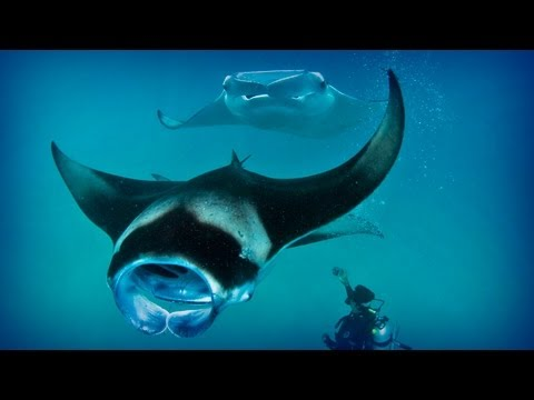 Maldives: diving paradise (full documentary)