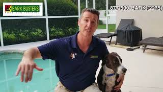How to Train Your Dog to Exit a Pool Safely- Bark Busters Home Dog Training
