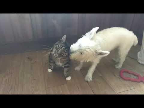 Dog won't leave cat alone