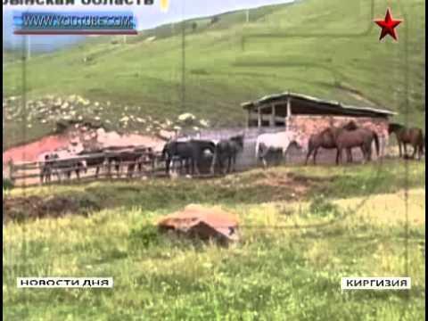 Чупакабра в Киргизии 13 06 2014г