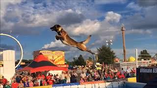 Belgian Malinois, Amazing Athlete!!!