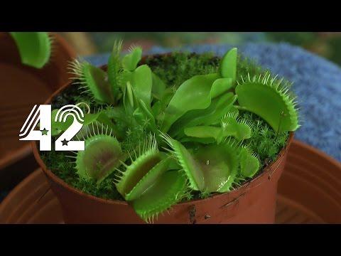 Die Sämlinge und wie geht es weiter mit den Exoten und anderen Pflanzen Teil 42