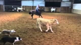 Jellybean- Jared Lesh cowhorses