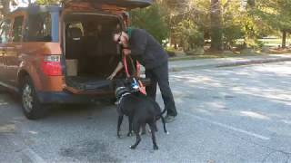 Dog Training Tip: Problems Getting your Dog into your Car?!