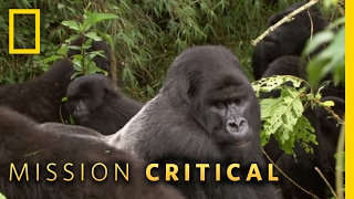A Silverback Showdown | Mission Critical