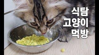 식탐고양이 먹방모음 Cat eating food 食べ物を食べる猫のビデオ