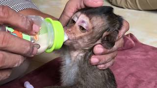 After Clean the tail Lori hungry just give her some of milk but not too much afraid vomiting. Lovely