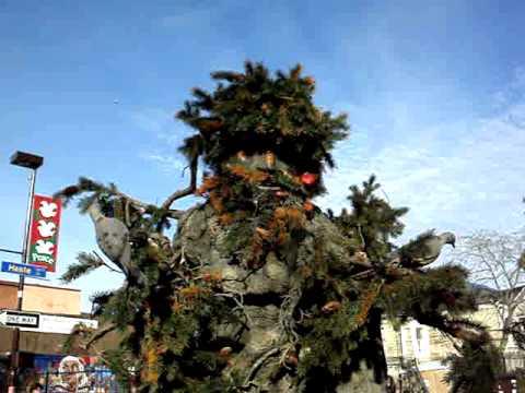 tree man disease wiki